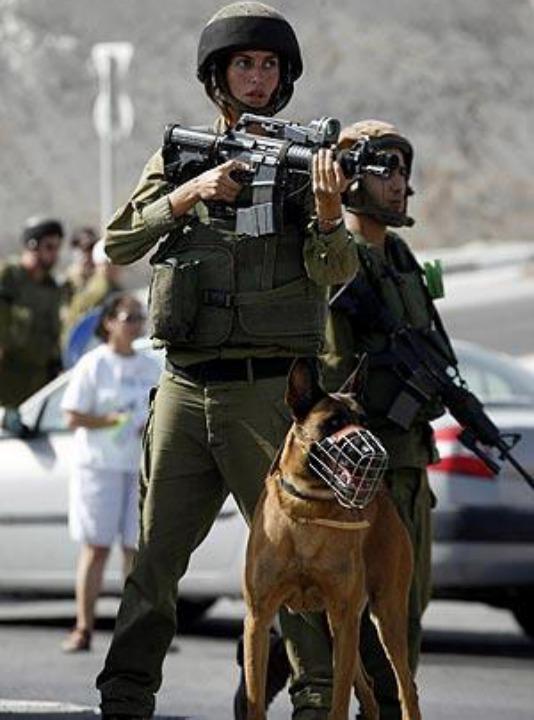 IDF17.jpg