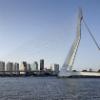 Rotterdam100x100.jpg