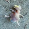 Schreeuwomvogelleven.jpg