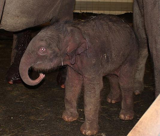 babyolifantjeislief.jpg