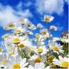 bloemetjesenliefde.jpg
