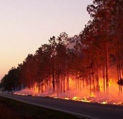 bosbrand.jpg