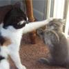 catspats.jpg