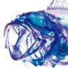 doorzichtigevisjeblup.jpg