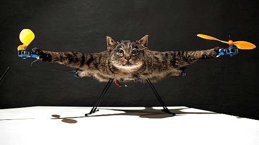 helicopterkat.jpg