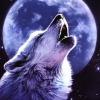 howlinwolftothemoon.jpg