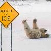 ijsbeerpatslolhahaha.jpg
