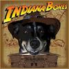 indiana-bones1.png