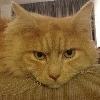 kattenheerser.jpg