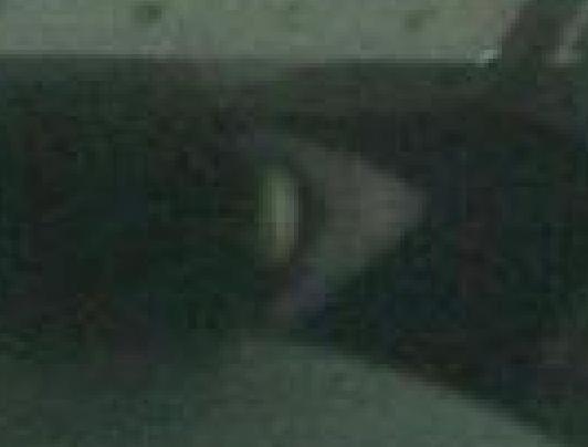 lulofflesje534.jpg
