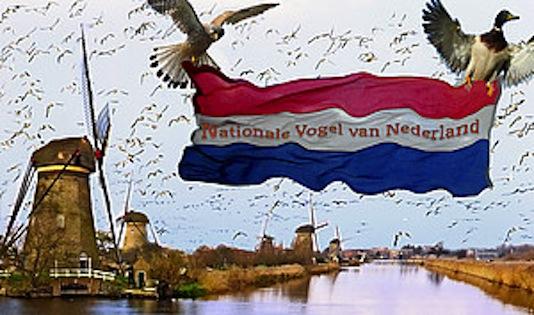 nationaalvogel534.jpg