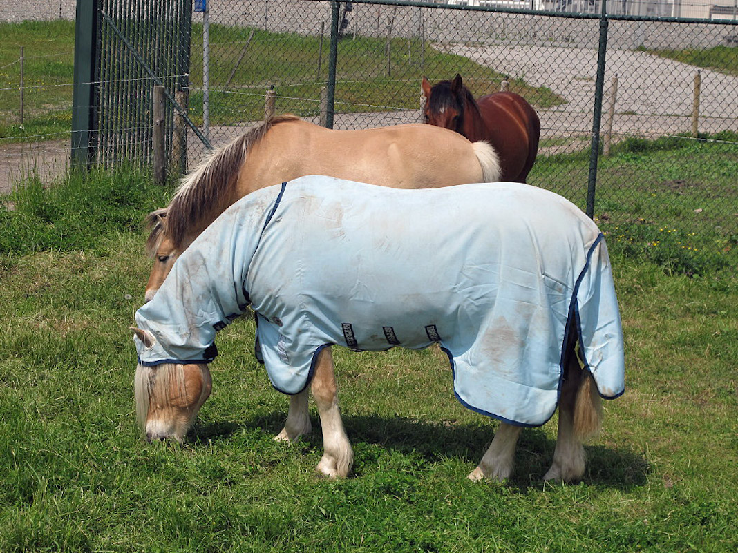 paardendeken.JPG