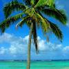 palmboommm.jpg