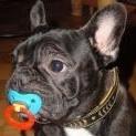 pennyhund.jpg