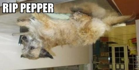 rippepper.jpg