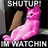 shutupcat.jpg