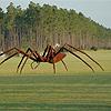 spinnenshop.jpg