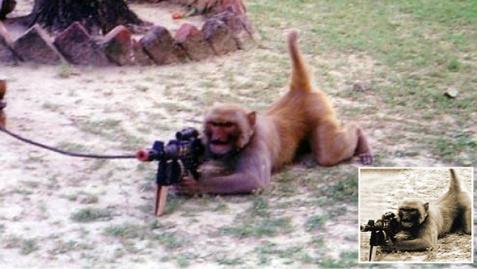 talibanaapnephoaxfake.jpg