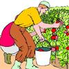 tomatenplukken doe je dus ZO
