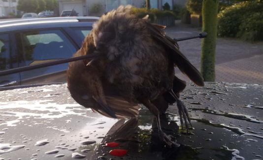 vogelkoptantenne.jpg