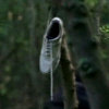 white-tennis-shoe-lost.jpg