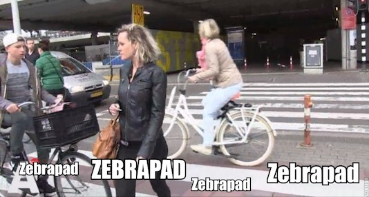 zebrabloed.jpg