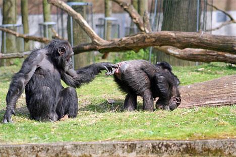 Geschoten in Burgers Zoo I (klik voor vergroting)