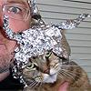 de cat met een aluminium hat