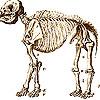 fossielen zijn tenslotte gewoon dode beesten