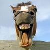 paardenbiefstuk