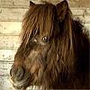 Deze Pony heeft maandagavond geneukt met een mens!
