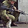 palestijnse kudtkat