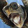 schildpad zegt ook al haha